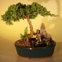 Juniper Stone Landscape by Bonsai Boy