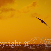 Beach Photo dream of flying sunset photo ocean photo by ImagesByCW