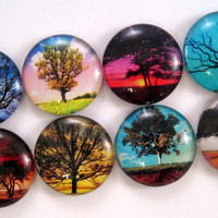 Tree Magnets - Set of Eight Glass Magnets - 1 Inch Strong Magnets