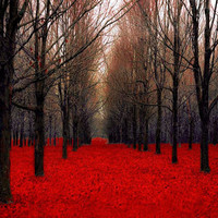 Large wall decor, Red Forest, 30x40, for men, bold red and black trees, rustic, cabin or lodge, Fiery Autumn