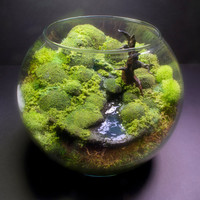 Bubble Moss Bonsai - Fantasy Terrarium