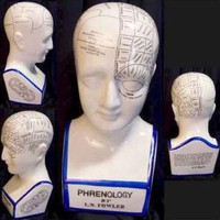 Phrenology Head Model