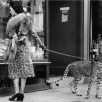 One Kings Lane - Black  White - Andy Irvine, Cheetah Who Shops