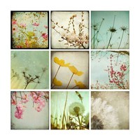 20 OFF SALE  Flower Dandelion Photography by MaleahTorney on Etsy