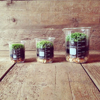 Gift for Men &amp; Women - Beaker Terrarium with Live Moss, Science Home Decor, Office Decor, Spring Wedding Favors (100ml)