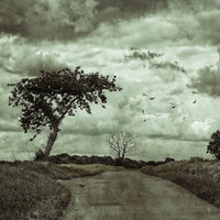 The Lonely Road Art Print by Ally Coxon | Society6