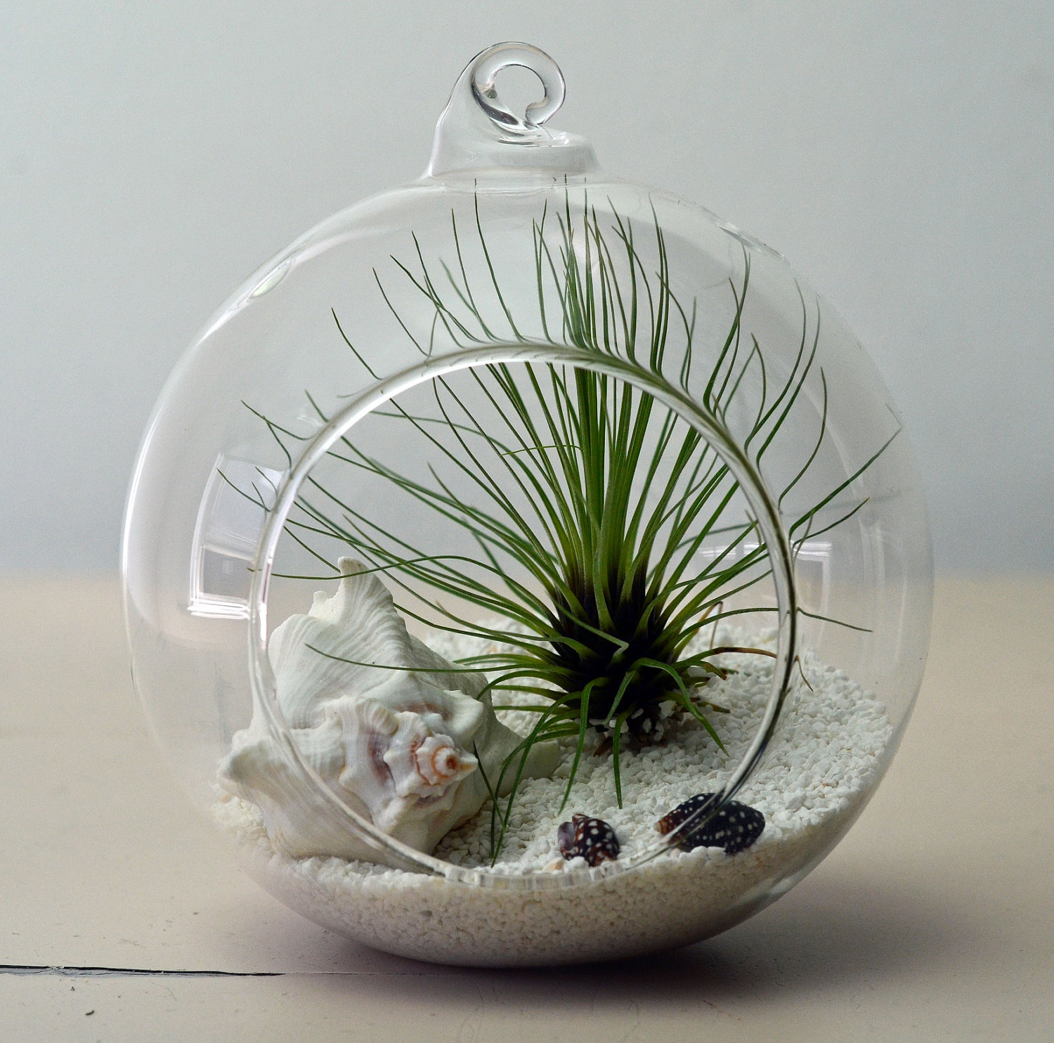 Air Plant Terrarium Tillandsia From PinkSerissa On Etsy