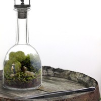 DIY Terrarium Kit - Romantik