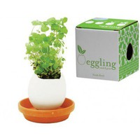 Egglings - Basil, Mint or Daisy