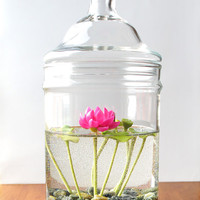 Miniature Pink Lotus Water Lily Terrarium in Repurposed Glass Vase