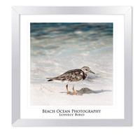 Beach photo lonely bird ocean cute closeup teal by ImagesByCW