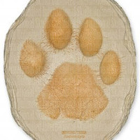 Tiger Footprint (Panthera tigris) | WFP-11