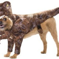 Animal Planet PET20109 Raptor Dog Costume, Small