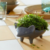 Ceramic Animal Planter - Hedgehog