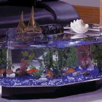 Octagon Coffee Table Aquarium - OpulentItems.com