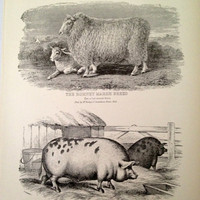 Vintage Sheep and Pig Print by CasaAndCo on Etsy