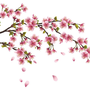 Cherry Blossom Branch Wall Decal - beautiful vinyl decoration