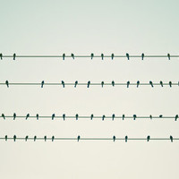 Birds on Four Wires  Art Print by Bree Madden  | Society6