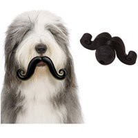 Amazon.com: Mini Humunga Stache Ball Dog Toy: Pet Supplies