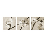 PJÄTTERYD Picture, set of 3, Flora Maia - IKEA