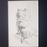1946 Lucy Dawson Mac Cairn terrier Vintage mounted dog plate/print Waiting patiently Unique gift