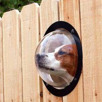 Dog Peek - OpulentItems.com
