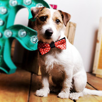 Pet Bow Tie at Firebox.com