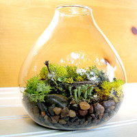 Teardrop Lichen Terrarium by TinyTerrains on Etsy