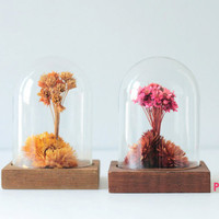 Dried flowers preserved in glass cloches jars, vintage Leonard Creations