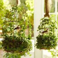 Live Ivy Birdcage