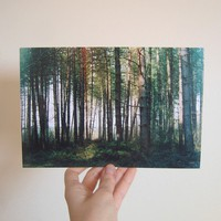 9 x 6 Woodland Print by watersounds on Etsy