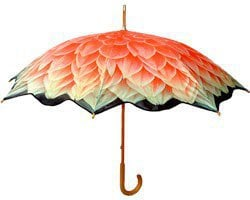 Dahlia - Walking length art umbrella review at Kaboodle