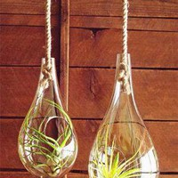 Roost Recycled Glass Bubble Hanging Terrariums at Velocity Art And Design