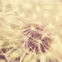 Dandelion Glow Cream Metallic 8x10 signed by HConwayPhotography