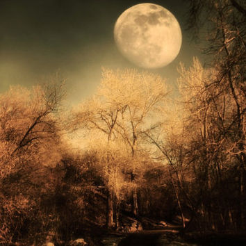 Dark Trees and  Moon 4x6 Fine Art Metallic by SylviaCPhotography