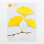 Large Ginkgo Leaf Sticky Note