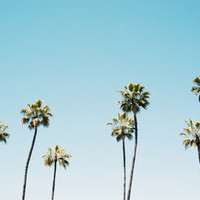 California Summer  Art Print by Bree Madden