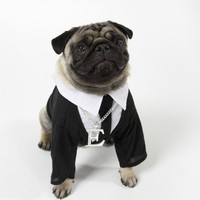 Pug Wearing Shirt, Tie and Necklace Photographic Print at AllPosters.com