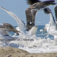 "Seagulls ""Splash""-Matted and Ready to Frame-Original Photography of Seagulls on the beach"