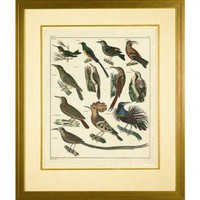 Phoenix Galleries Aviary 3 Framed Print - HP845 - All Wall Art - Wall Art & Coverings - Decor