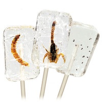 Insectilix Lolly at Firebox.com