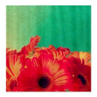 Vintage Gerberas Shower Curtain> Shower Curtains> Janet Antepara Designs