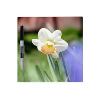 Apricot Daffodil Dry Erase Board from Zazzle.com
