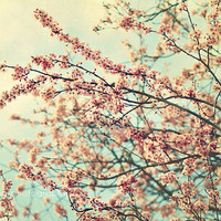 "Shabby chic home decor, ""Take a rest"", cherry blossom photograph, pastel, pink, aqua, teal, nature"
