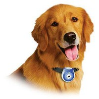 ThinkGeek :: Pet&#x27;s Eye View Digital Camera