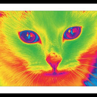 PSYCHEDELIC KITTY 11 X 14 Neon Cat Art PRINT Giclee Fine Art Picture (1047)