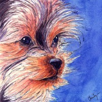 Yorkie yorkshire terrier original watercolor pet portrait | CherilynnFineArt - Pets on ArtFire