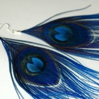 Blue Peacock Feather Earrings | LeafLee - Jewelry on ArtFire