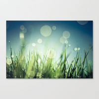 Grass  Stretched Canvas by Christian Solf