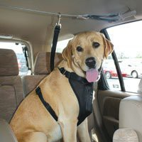 Kurgo Automobile Zip-Line, Large (Dogs 50 to 80 Pounds)